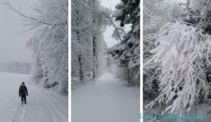 Winterwandern Goldsteig - Zweiter Tag