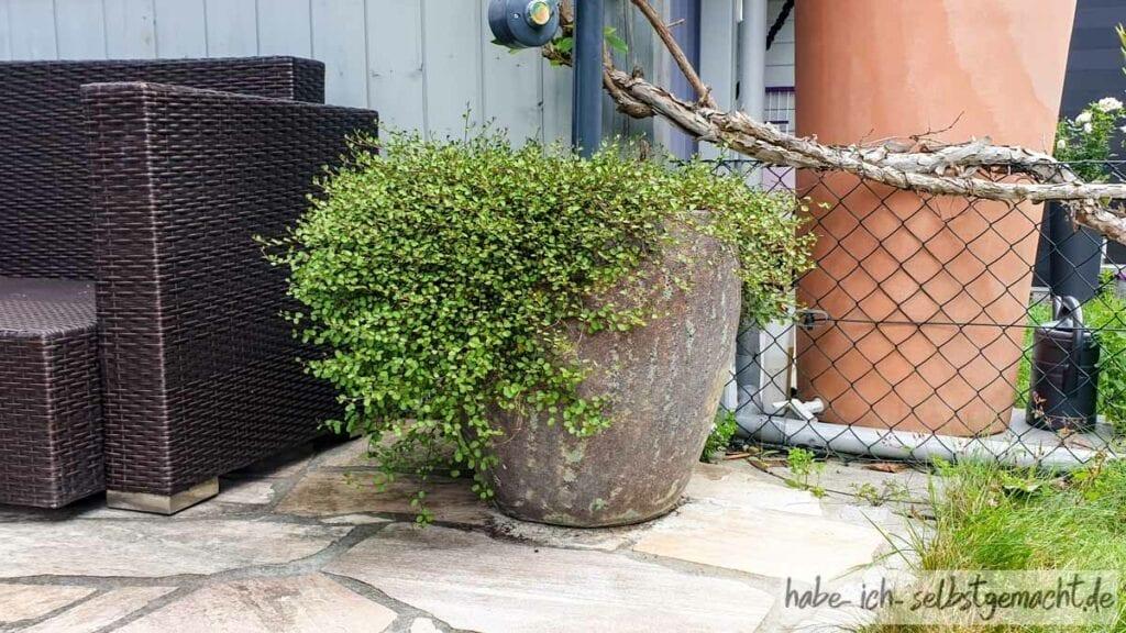 Sonnenschirmständer im Blumentopf