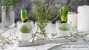 Hyazinthe Amaryllis in Wachs
